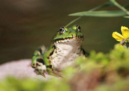 frog sitting on a stone Stock Photo