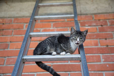 young cat climbing on a ladder