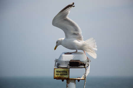Seagull flying next to a ferry