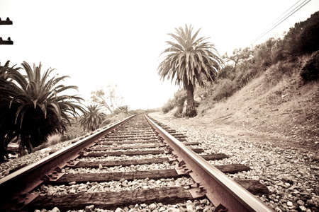 Train tracks surrounded by palm trees Stock Photo - 20705402
