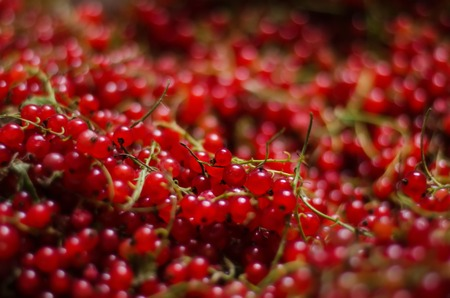 Close-up of a bright red currant. The heap of tasteful and healthful red currant for vegetarian breakfast. Fresh juicy berries. Creative texture.