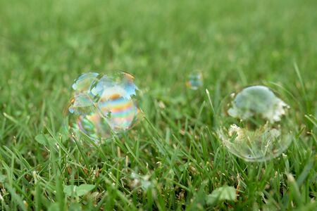 soap transparent bubbles with reflection on lush green grass