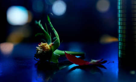 rose without petals. Empty rose inflorescence. On the blue table with a side