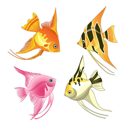 angelfish: angelfish fish icons