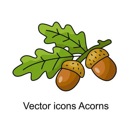 Icon of acorns illustration.