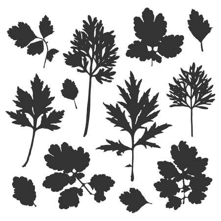 Silhouette of bush leaves. Vector illustration.