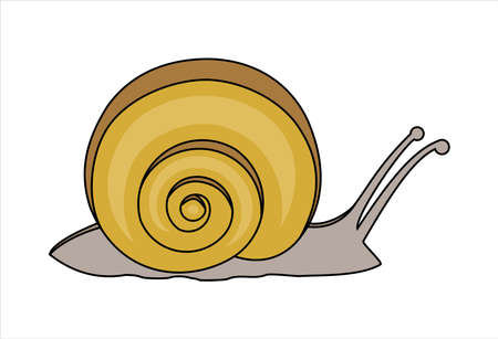 Snail, side view. Symbol of slowness. Modern flat vector illustration on white background.