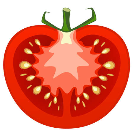 tomato cartoon: Vector illustration of tomato