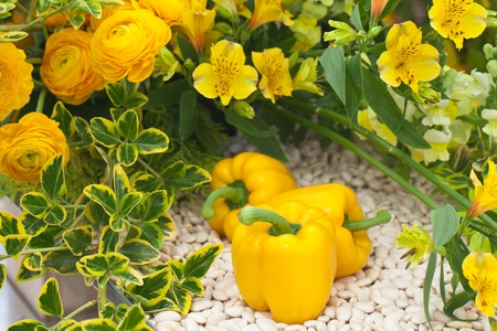 Yellow capsicum and flowers photo