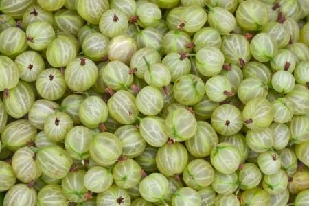 gooseberries: Gooseberries  Stock Photo