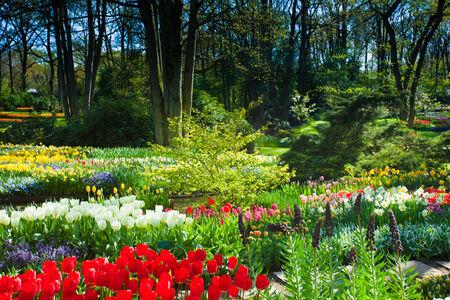 Garden landscape photo