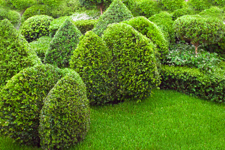 topiary: Topiary in a garden