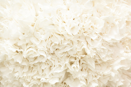 Fiori bianchi sfondo Archivio Fotografico - 49195125