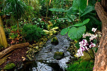 tropical garden: Tropical garden landscape