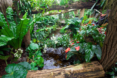 ferns and orchids: Tropical garden landscape