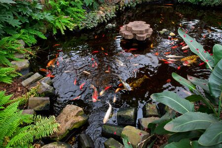 fish pond: Tropical garden landscape with fish pond