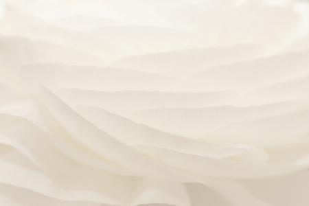 Background of white flower petals Standard-Bild