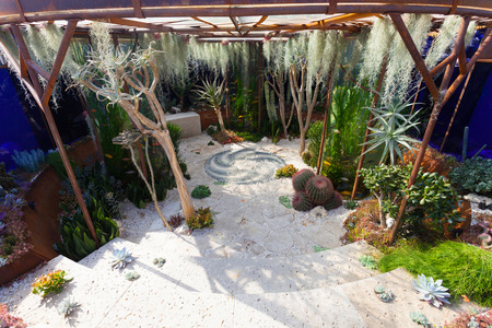 Garden landscape with cacti and aquarium Standard-Bild