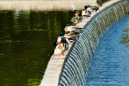 ducks in fountain in Budapest