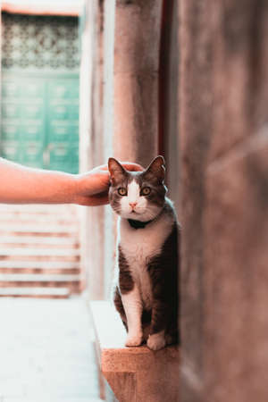 Hand patting a cute street cat in split, croatia. Wide eyes and grey white furred, looking surprised into the distance