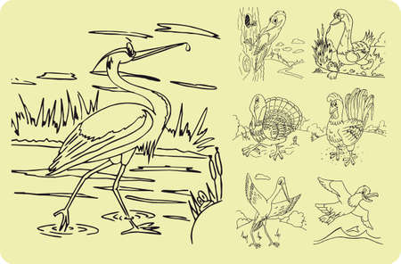 cormorant: A set of illustrations of animals for kids coloring