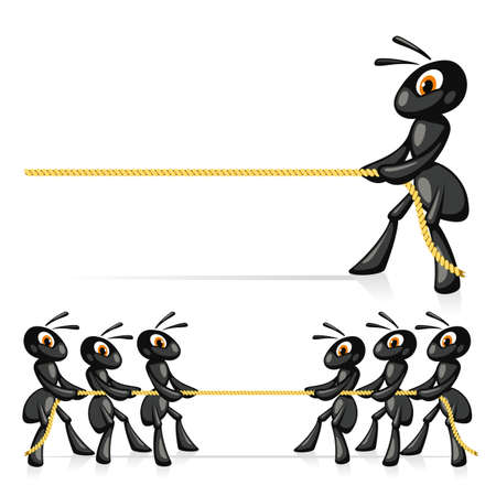 tug war: Competition With Rope  Funny ants compete in power and pull a rope