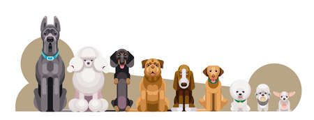 Flat illustration of dogs of different breeds sitting in growth from large to small against the background of sugar bone