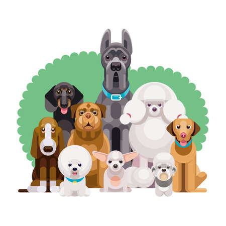 Flat illustration of dogs of different breeds sitting together from smallest to largest