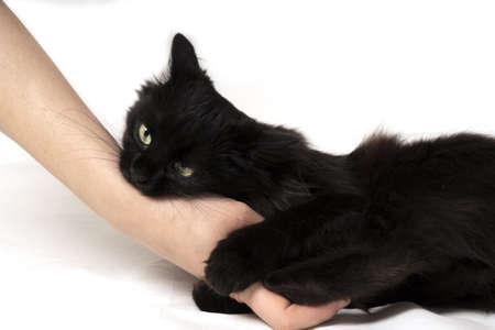 angry black cat bites female hand