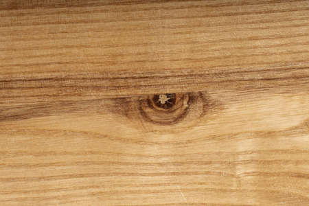 Wooden cut structure, eye-like pattern, top view, closeup.