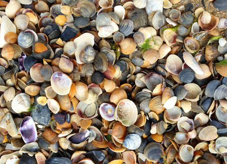 seashells for background, full screen image, top view.
