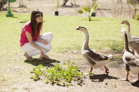 Cute young woman hanging out and feeding some ducks in a farm photo