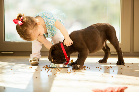 animal feed: Beautiful little girl watching her puppy eat in the living room Stock Photo