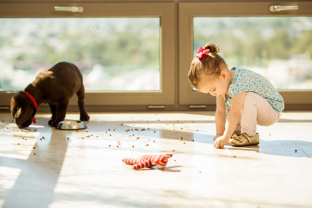 making up: Cute Labrador puppy making a mess with his food while a little girl helps him pick it up Stock Photo