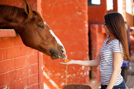 Pretty Hispanic girl feeding her horse carrots in a stable photo