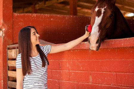 horse stable: Pretty young woman brushing and grooming her horse in a ranch Stock Photo