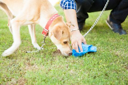 그의 개가 그것을 냄새 맡는 동안 가방과 함께 일부 개 똥을 집어 들고 남자의 손의 근접 촬영 스톡 콘텐츠