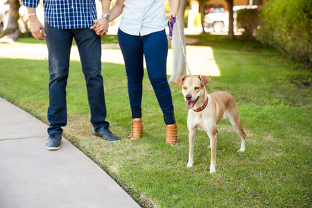 a young family: Closeup of young couple holding hands and walking their friendly dog around a park