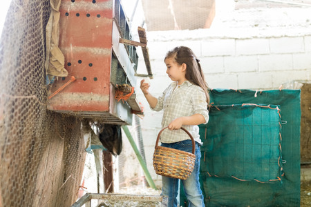 Cute girl collecting eggs from chicken coop into basket at poultry farm