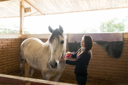 Mid adult woman grooming white equine with a brush in ranch