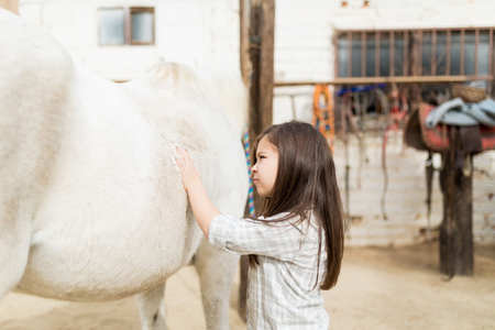 Female child rubbing body of horse while standing in barn at countryside