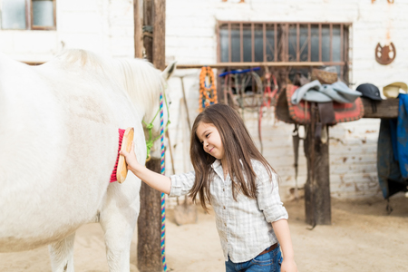 Brunette girl smiling while brushing horse for wellbeing in stable