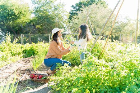 Little girl assisting mother in harvesting vegetables at garden during summer