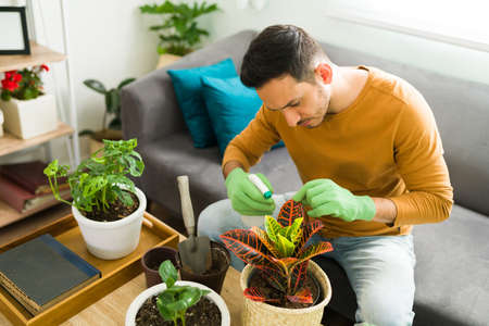 Positive man in his 30s watering his plants and practicing gardening at home to maintain a good mental health routine 版權商用圖片