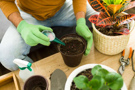 Man putting fertilizer on the soil of a pot to help his plants to grow. Male hands wearing  gloves and using gardening tools to take care of the plants