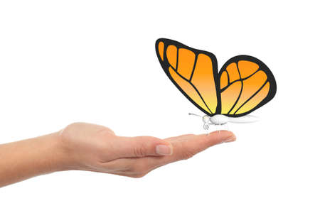butterfly hand: Butterfly in woman hand with a white isolated background Stock Photo
