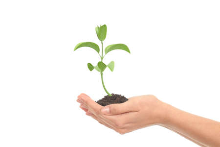 fresh start: Little plant growth in a woman hands on a white isolated background