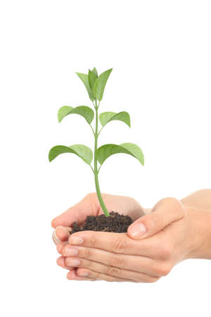 Little render of a plant growing in a woman hands on a white isolated background         photo