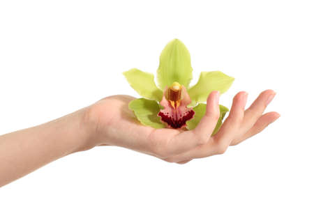 Beautiful woman hand holding a green orchid on a white isolated background                photo