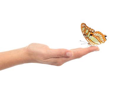 donna farfalla: Bella farfalla su una mano di donna isolato su uno sfondo bianco